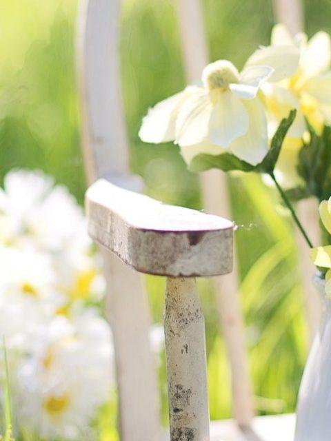 Entrez les géraniums des jardins pour l'hiver